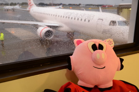 Stinky the pig travels 450x298 Travels
